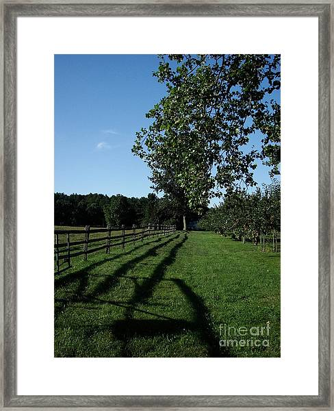 Along The Fence Framed Print
