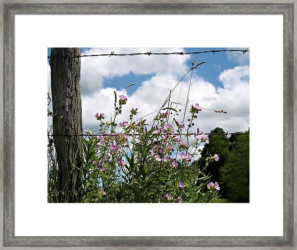 Along The Fence Framed Print