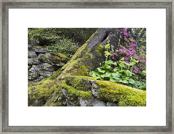 Framed Print featuring the photograph Along The Pathway by Priya Ghose