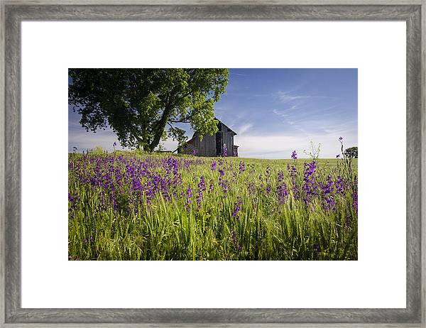 Along The Roadside Framed Print