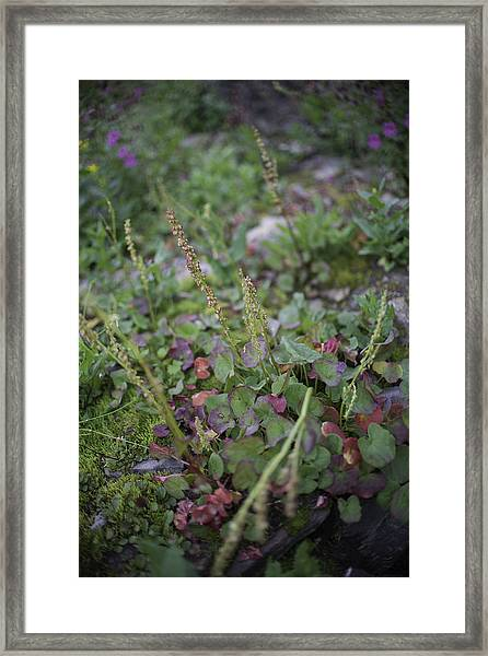 Alpine Color Framed Print