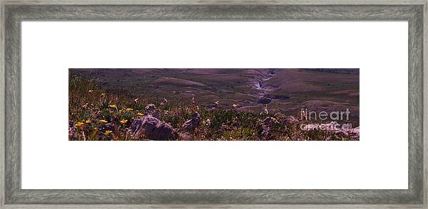 Alpine Floral Meadow Framed Print