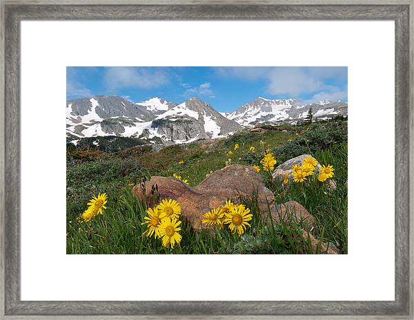 Alpine Sunflower Mountain Landscape Framed Print