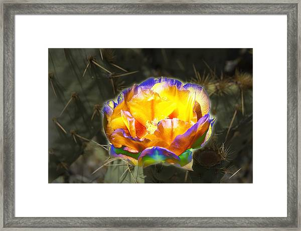 Altered Yellow Prickly Pear Flower Framed Print