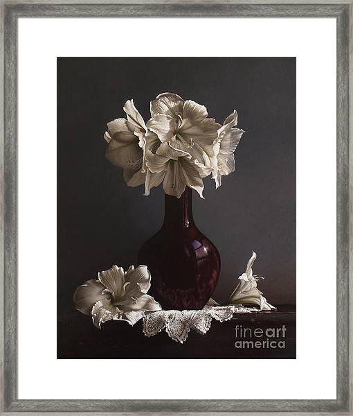 Amaryllis  Framed Print by Lawrence Preston