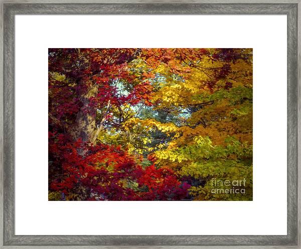 Amber Glade Framed Print