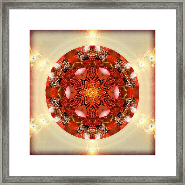 Ambrosia Framed Print