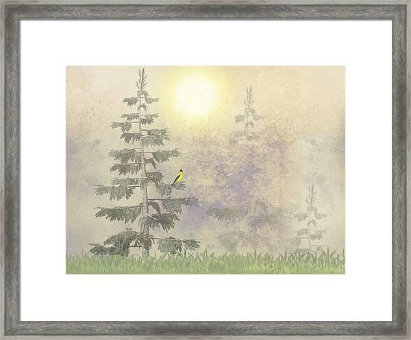 American Goldfinch Morning Mist  Framed Print