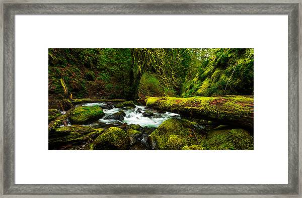 American Jungle Framed Print