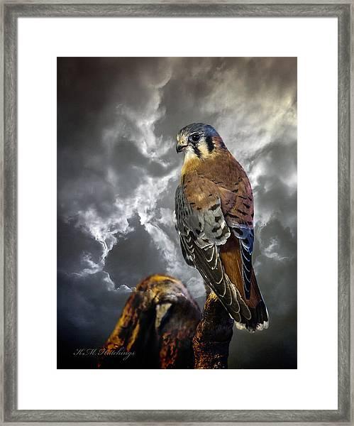 American Kestrel Framed Print by Keith Hutchings