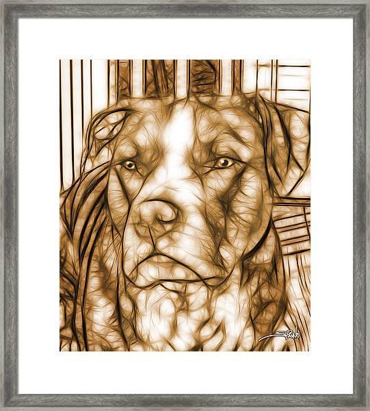 American Pit Bull - Sepia Sketch  Framed Print