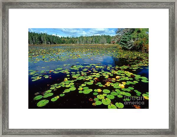 Ames Pond Framed Print by Jim Block