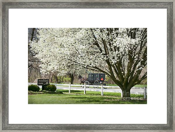 Amish Buggy Fowering Tree Framed Print
