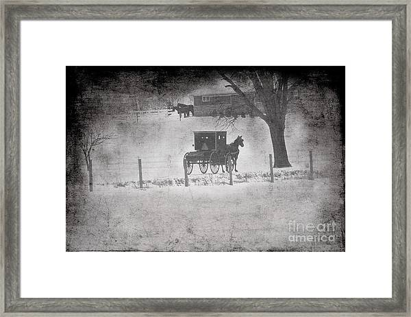 Amish Buggy Winter January 2014 Framed Print