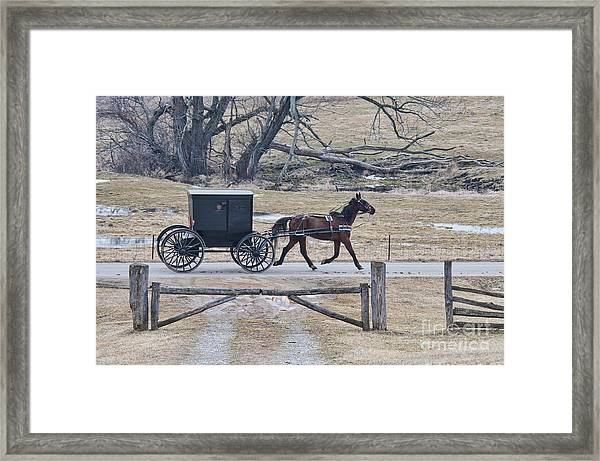Amish Horse And Buggy March 2013 Framed Print