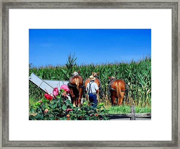 Amish Plowing Framed Print