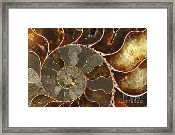 Ammolite Framed Print