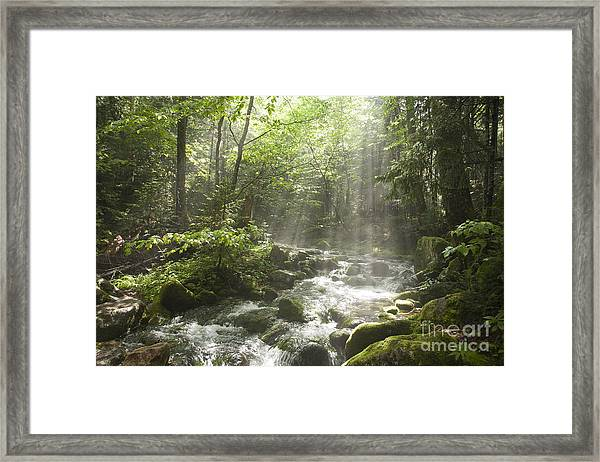Ammonoosuc Ravine Trail - White Mountains Nh Usa Framed Print