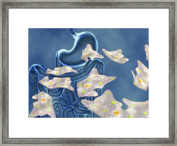 Amoebic Dysentery Framed Print