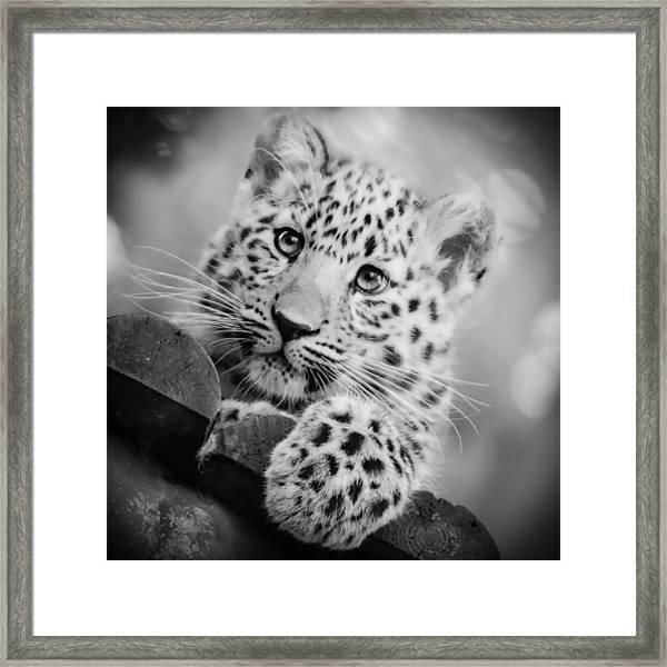 Amur Leopard Cub Portrait Framed Print
