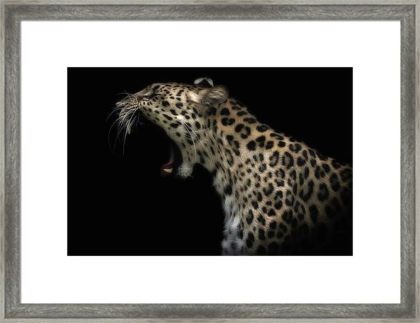 Amur Leopard (in Colour) Framed Print by David Williams