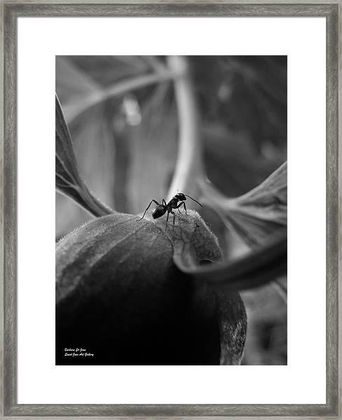 An Ant's Life Framed Print