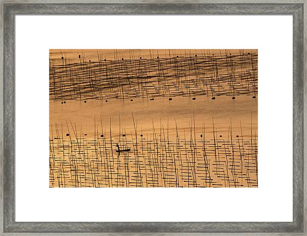 An Aquaculture Farmer And His Farm Under Sunset Framed Print