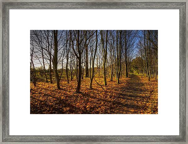 An Autumn Walk Framed Print