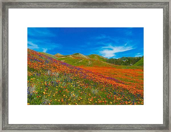 An Ocean Of Orange  Framed Print