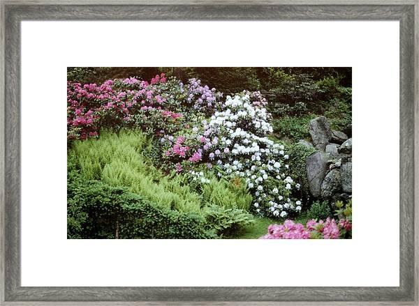 An Olmstead Garden Framed Print