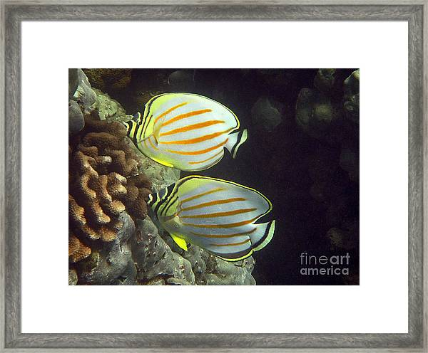 An Ornate Pair Framed Print