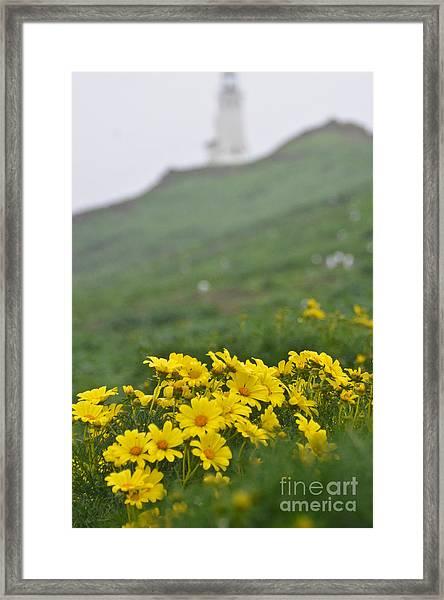 Anacapa Spring Framed Print