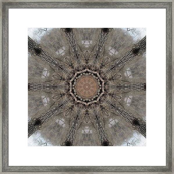 Ancient Cottonwood Framed Print