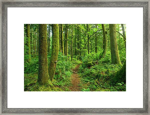Ancient Forest Path Framed Print