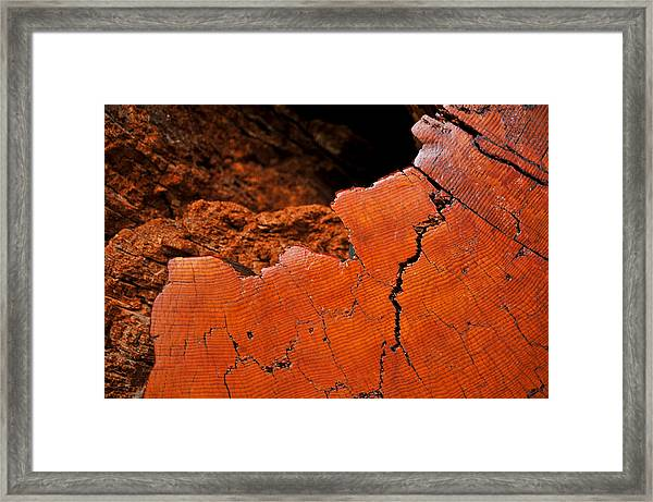Ancient Log Framed Print