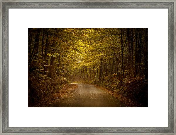 Country Road In Mississippi Framed Print