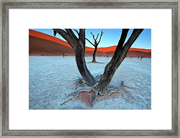 Ancient Trees In The Vlei Framed Print