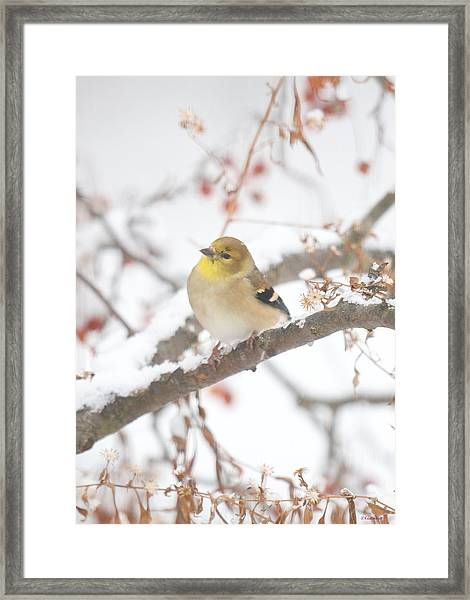 And Now What Framed Print
