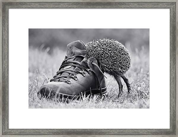 And Suddenly It's My Size? Framed Print by Elena Solovieva
