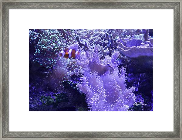 Anemone Starlight Framed Print