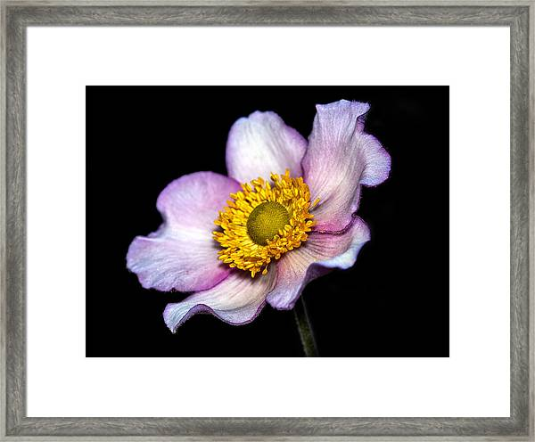 Daughter Of The Wind Framed Print