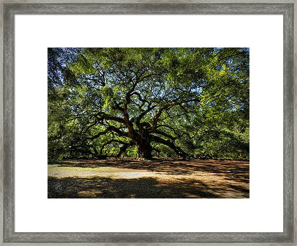 Framed Print featuring the photograph Angel Oak 001 by Lance Vaughn