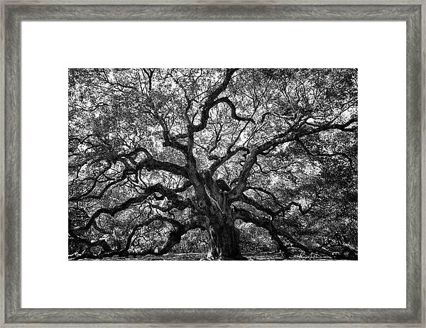 Angel Oak Framed Print