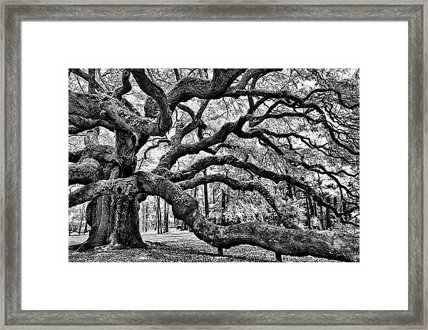 Angel Oak Tree Ir Hdr Framed Print