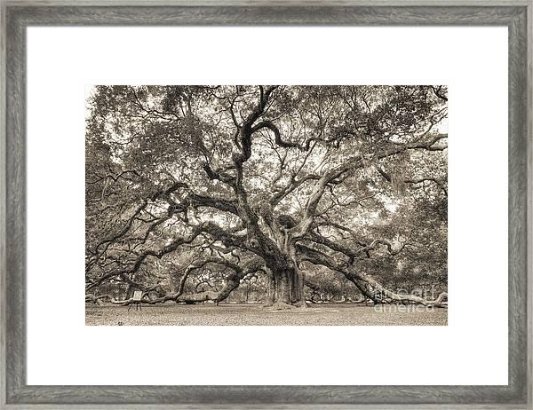 Angel Oak Tree Of Life Sepia Framed Print