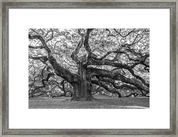 Angel Oak Tree Framed Print