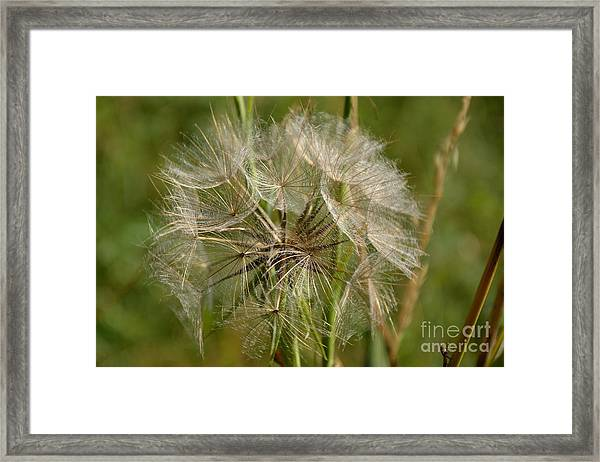Framed Print featuring the photograph Angel Petals by Scott Lyons