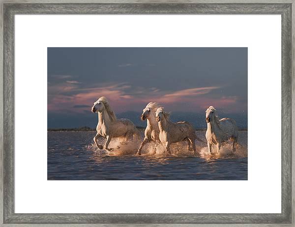 Angels Of Camargue Framed Print