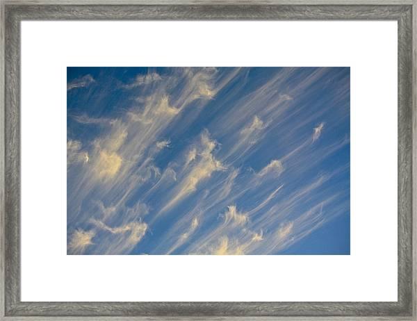 Angels Trumpets Framed Print