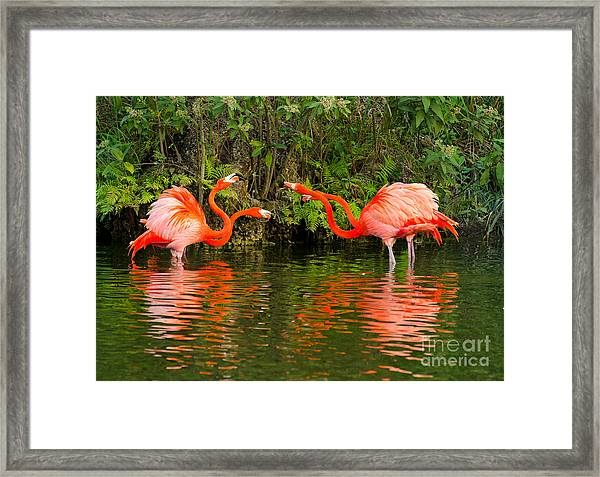 Angry Birds - Doubles Match Framed Print